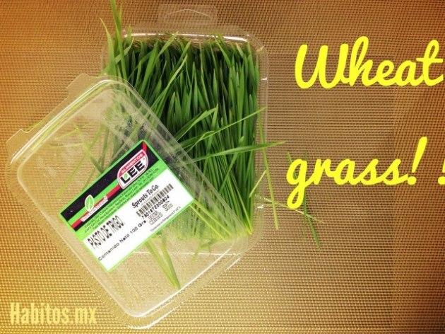recetas - wheat  grass